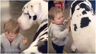Enorm hund og lite barn blir venner