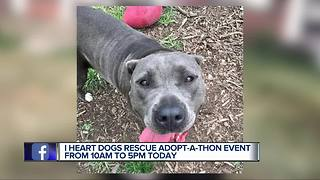 """I Heart Dogs Rescue & Animal Haven """"Adopt-a-thon"""""""