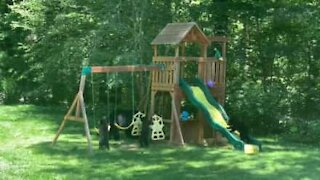 Family of bears have fun in backyard's playground