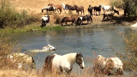 Horse Pool Party!