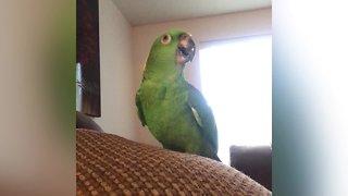 Funny Singing Pets