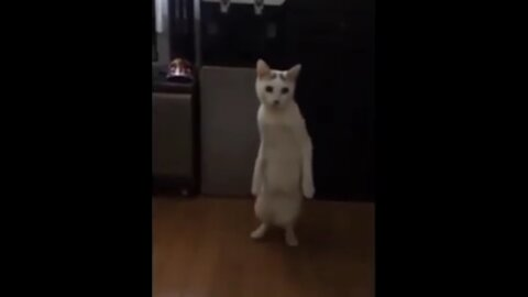 Very very funny and cute cats