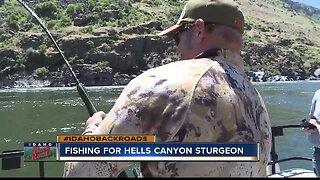 Catching Snake River Sturgeon