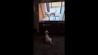 Watching Digger watch Digger