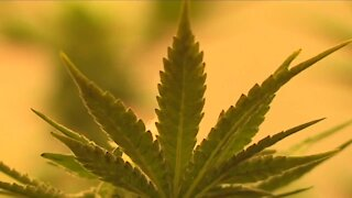 'Coalition to Regulate Marijuana Like Alcohol' launches new bid to legalize recreational cannabis