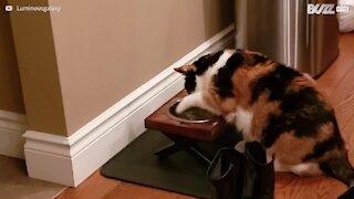 """Cette chatte """"patauge"""" dans sa gamelle d'eau"""