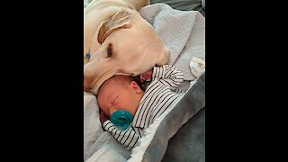 Sweetest dog ever cuddles with newborn baby