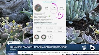 Bonsall nursery instagram account hacked