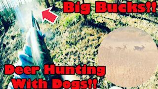 Big Bucks Everywhere!! Deer Hunting With Dogs