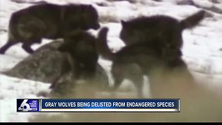 State control of wolves?