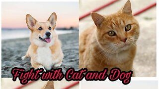 Funny Cats and Dogs - Dog and Cat Fighting Scene