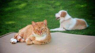 Pet Talk Tuesday - Gardens and your pet