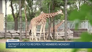 Detroit Zoo to reopen for members only on June 8