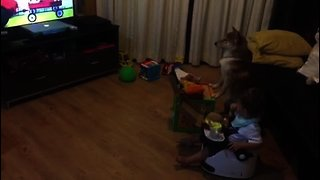 Shiba Inu & toddler enjoy pizza and movies together
