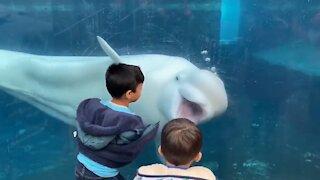Funniest Moments Baby Meet Animals_