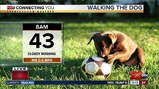 Morning walk forecast