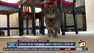 Should we be concerned about our pets & COVID-19?
