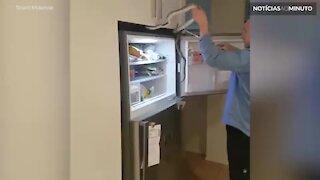 Cobra é capturada em geladeira