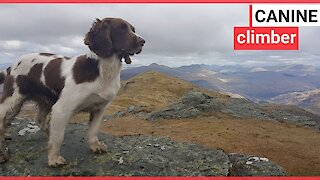 A 'Munro bagging' dog and his mountaineering owner