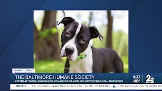 Gus the dog is up for adoption at the Baltimore Humane Society