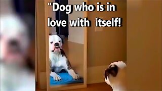 Dog that can't stop looking at himself