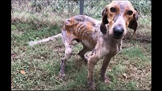 Rescued homeless dog