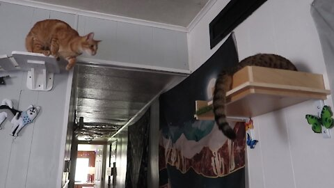 Cat wakes up kitten in epic shelf collapse