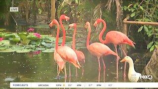 Everglades Wonder Gardens reopens in Bonita Springs