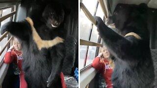 Giant bear hilariously thinks he's a tiny lap dog