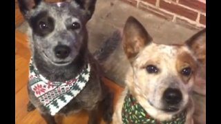 Dog Hilariously Gives Sibling A Hug On Command