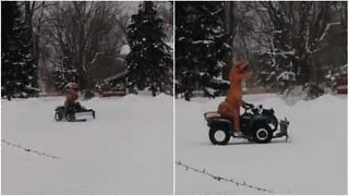 Dinosaurer vet også hvordan de skal leke i snøen!
