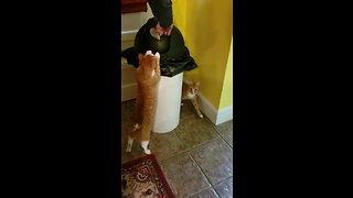 Cat helps owner throw away trash
