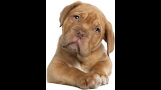 Funny Dogs reactions to Vet