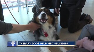 Therapy dogs visit med students