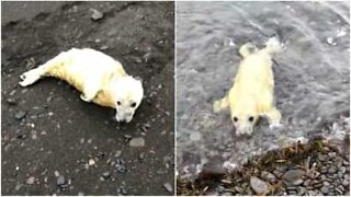 Baby seal stranded on beach
