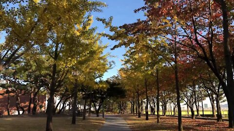 선유도 공원의 가을저녁, Autumn evening of Seonyudo Park, Seoul