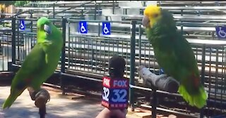 Singing Talking Laughing Funny Smart Clever #Parrots Viral Video Compilations
