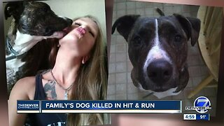 Denver police looking for hit-and-run driver who struck and killed dog