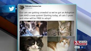 Humane Society giving away cats
