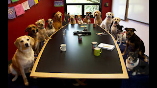 What Does A Good Dog Meeting Look Like !