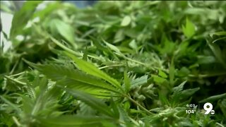 Legal marijuana? You could vote it in.