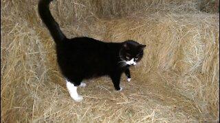 Barney - Best Barn Kitty Ever