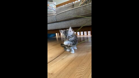Cute kitten playing with plant