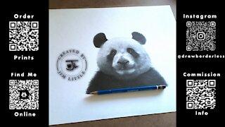 Panda pencil drawing time lapse