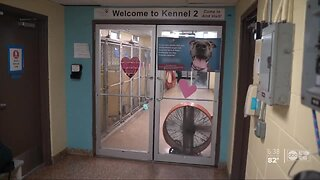 Some Tampa Bay area pet shelters report spike in adoptions and surrenders