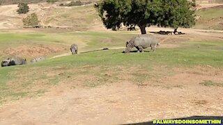 San Diego Safari Park part 3
