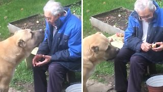 Old man shares his apples with doggy best friend