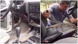 Fanget! Slange bor i en bil