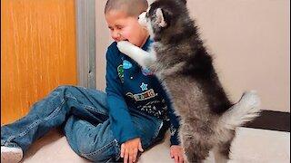 Siberian Husky Puppy Play