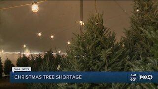 Christmas tree shortage